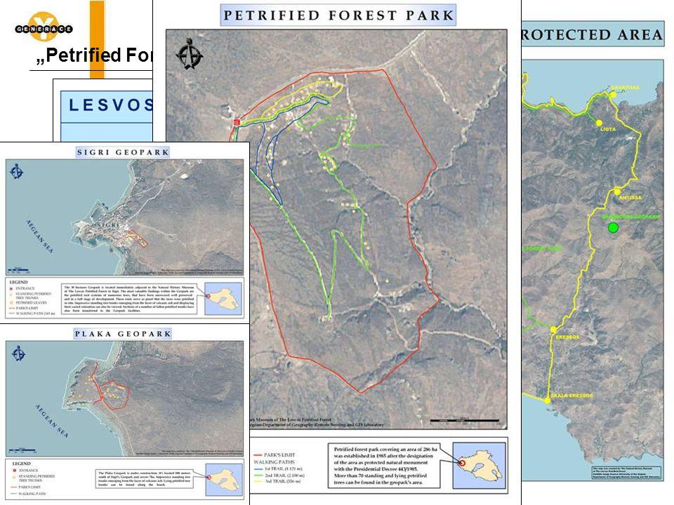 """""""Petrified Forest"""" – Zkamenělý les"""