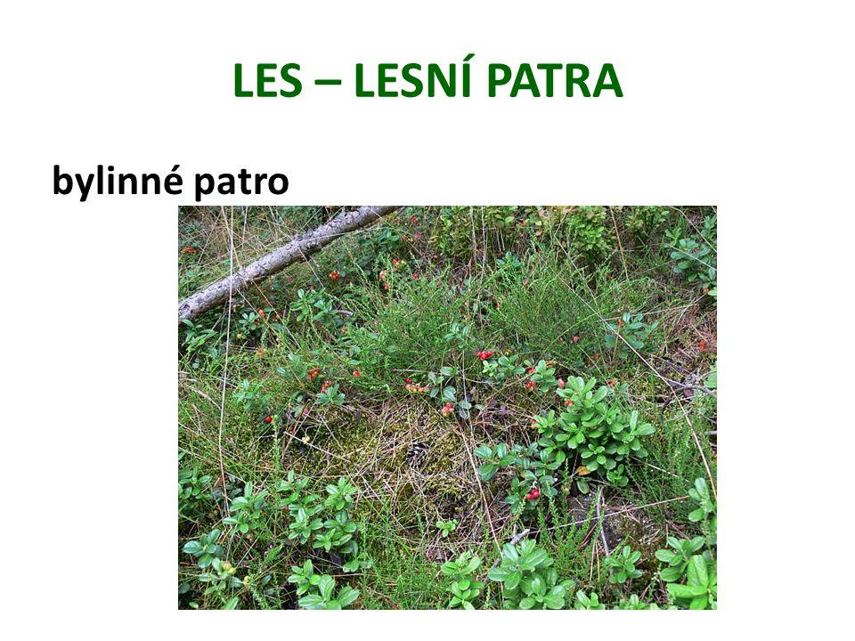 LES – LESNÍ PATRA bylinné patro