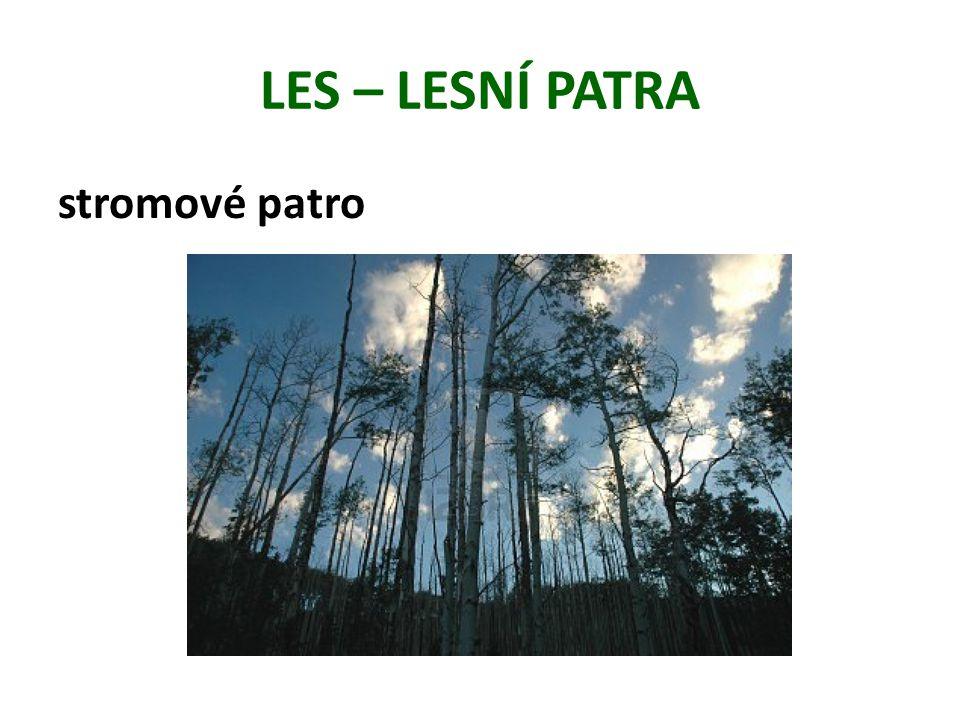 stromové patro