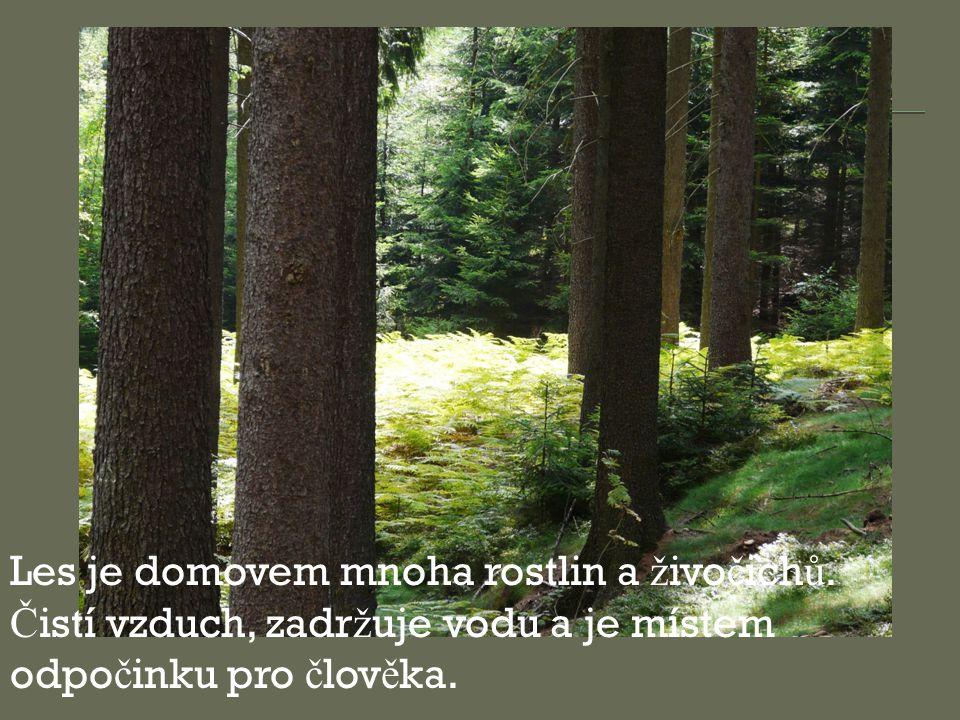 Les je domovem mnoha rostlin a ž ivo č ich ů. Č istí vzduch, zadr ž uje vodu a je místem odpo č inku pro č lov ě ka.