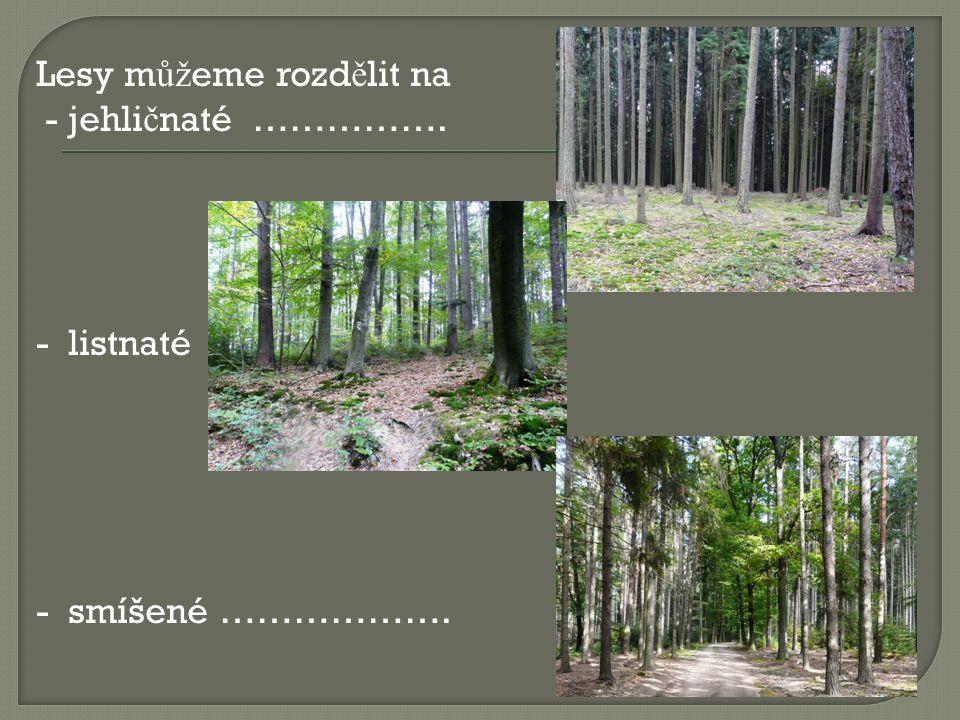 Lesy m ůž eme rozd ě lit na - jehli č naté ……………. - listnaté - smíšené ……………….