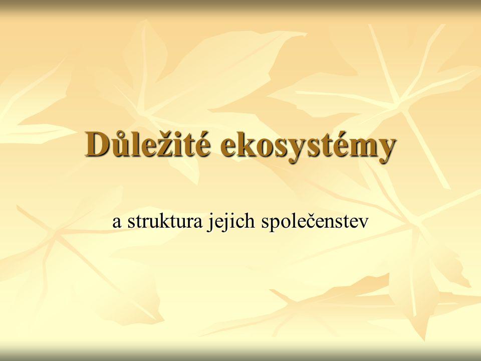 Ekosystém LES Hálky bejlomorky bukové (Mikiola fagi), Ročov, 2006