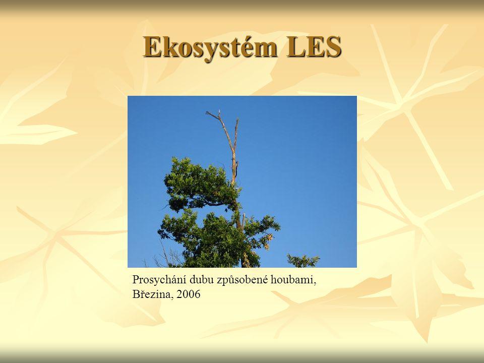 Ekosystém LES Prosychání dubu způsobené houbami, Březina, 2006