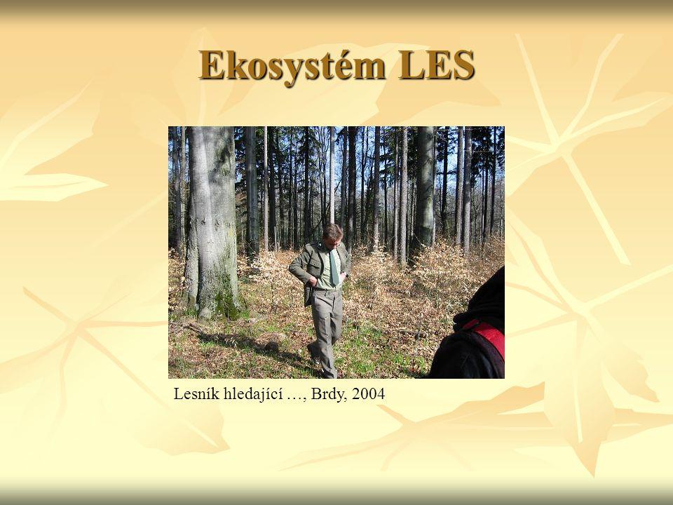 Ekosystém LES Lesník hledající …, Brdy, 2004