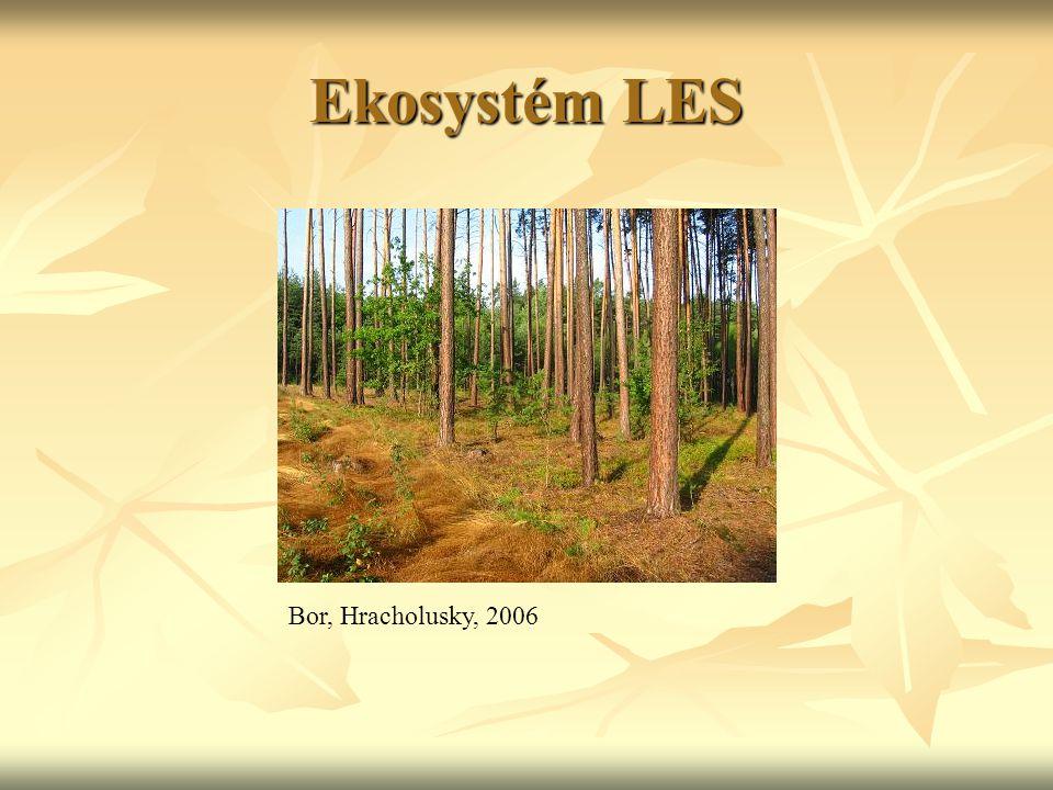 Ekosystém LOUKA větší býložravci – např.sysel obecný, hlodavci větší býložravci – např.