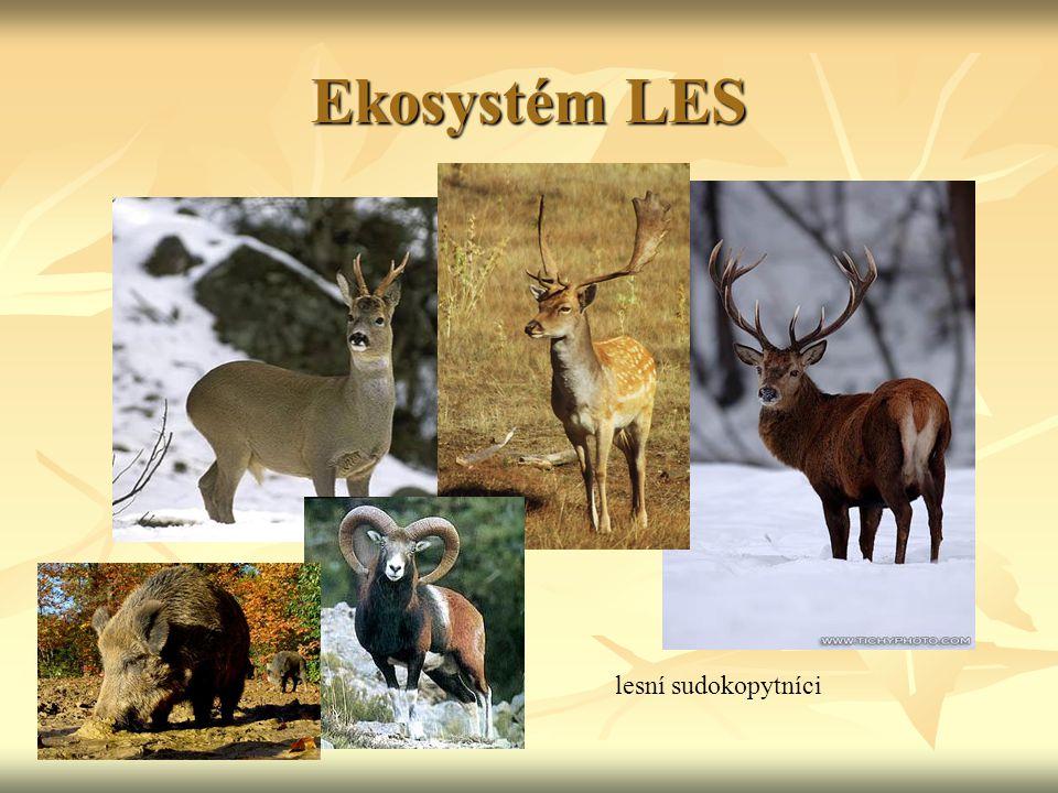 Ekosystém LES lesní sudokopytníci