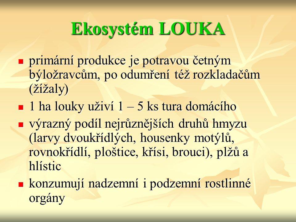Ekosystém LOUKA primární produkce je potravou četným býložravcům, po odumření též rozkladačům (žížaly) primární produkce je potravou četným býložravcům, po odumření též rozkladačům (žížaly) 1 ha louky uživí 1 – 5 ks tura domácího 1 ha louky uživí 1 – 5 ks tura domácího výrazný podíl nejrůznějších druhů hmyzu (larvy dvoukřídlých, housenky motýlů, rovnokřídlí, ploštice, křísi, brouci), plžů a hlístic výrazný podíl nejrůznějších druhů hmyzu (larvy dvoukřídlých, housenky motýlů, rovnokřídlí, ploštice, křísi, brouci), plžů a hlístic konzumují nadzemní i podzemní rostlinné orgány konzumují nadzemní i podzemní rostlinné orgány