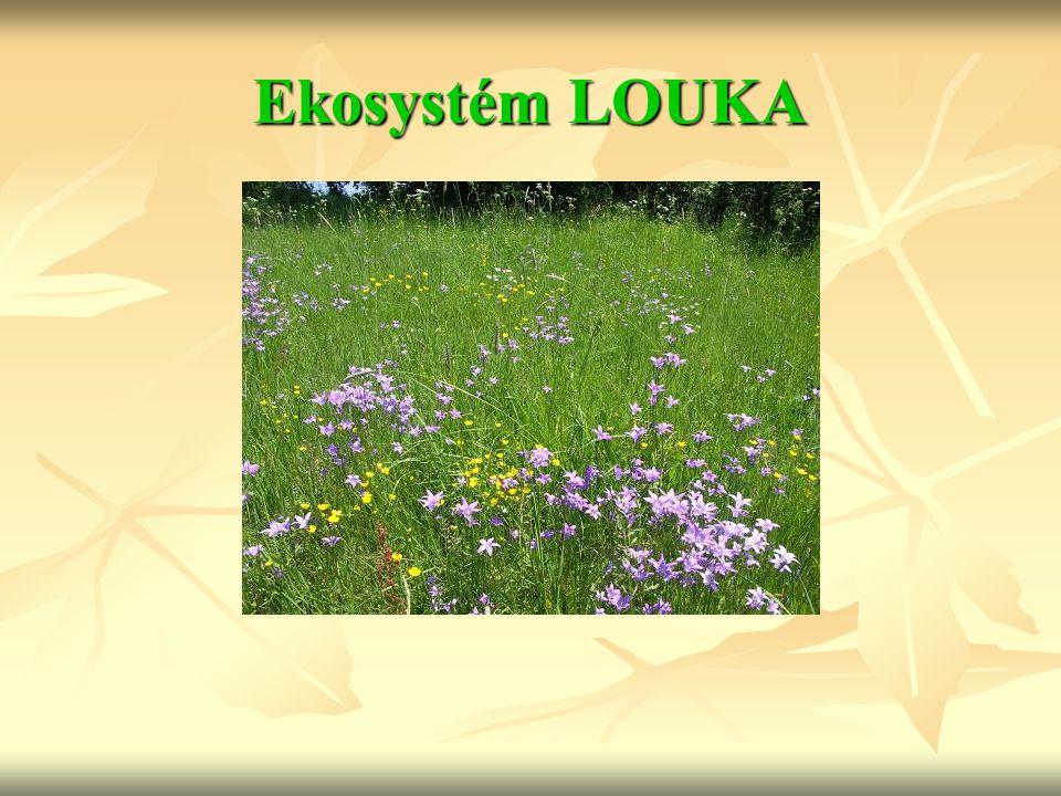 Ekosystém LOUKA