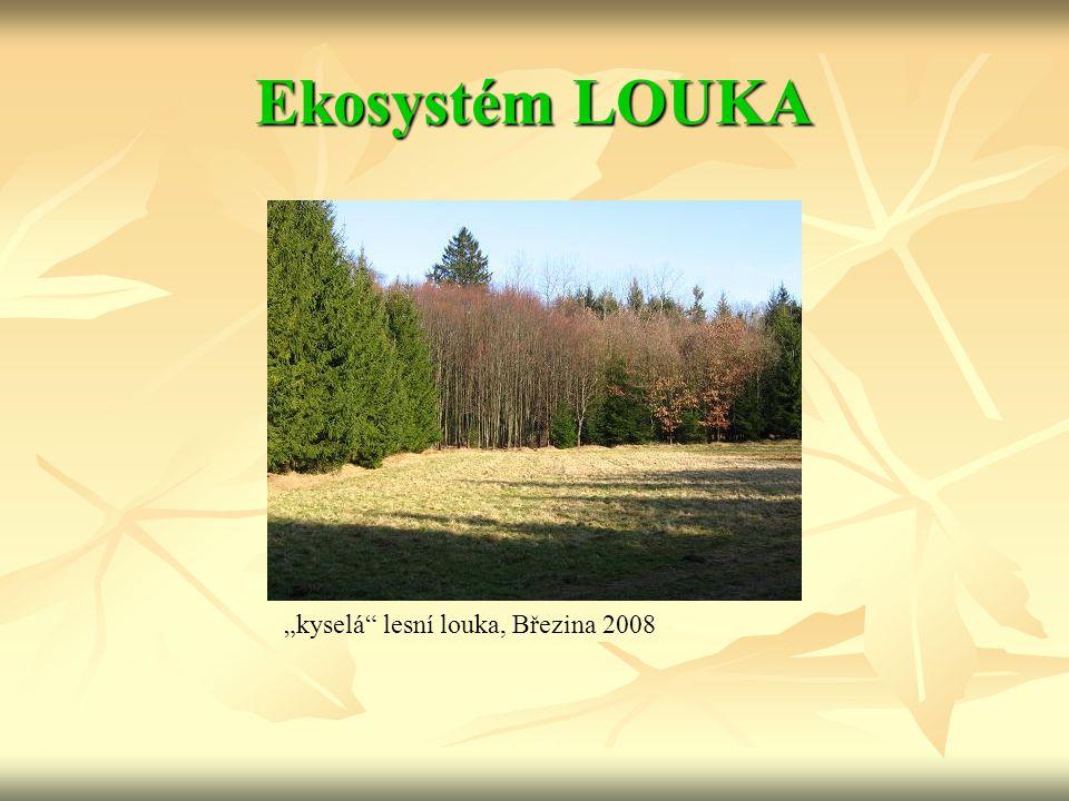 """""""kyselá"""" lesní louka, Březina 2008"""