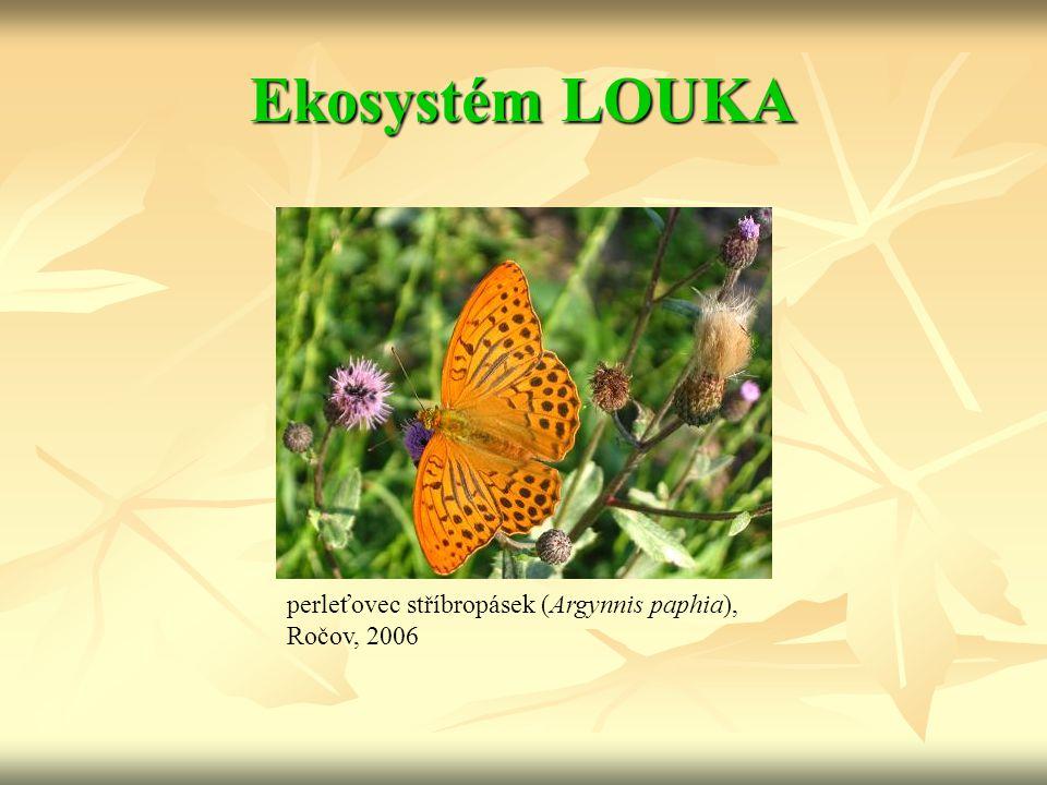 Ekosystém LOUKA perleťovec stříbropásek (Argynnis paphia), Ročov, 2006