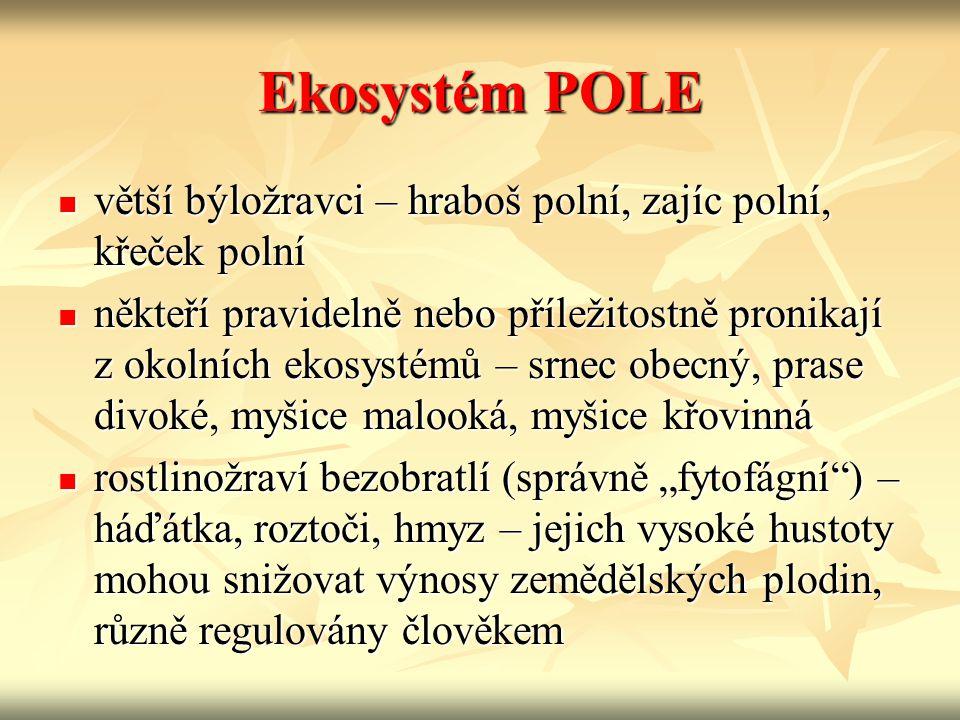 Ekosystém POLE větší býložravci – hraboš polní, zajíc polní, křeček polní větší býložravci – hraboš polní, zajíc polní, křeček polní někteří pravideln