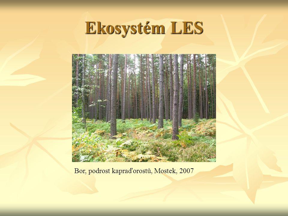 Ekosystém LES na všechny úrovně napojeni četní parazité – prvoci, ploštěnci, hlístice, roztoči, vši, blechy na všechny úrovně napojeni četní parazité – prvoci, ploštěnci, hlístice, roztoči, vši, blechy bohatá je fauna půdních dekompozitorů bohatá je fauna půdních dekompozitorů vegetační lesní stupně: dub – buk – hercynská směs – jedle – smrk – kleč vegetační lesní stupně: dub – buk – hercynská směs – jedle – smrk – kleč horní hranice lesa (v ČR) = 1 350 m n.