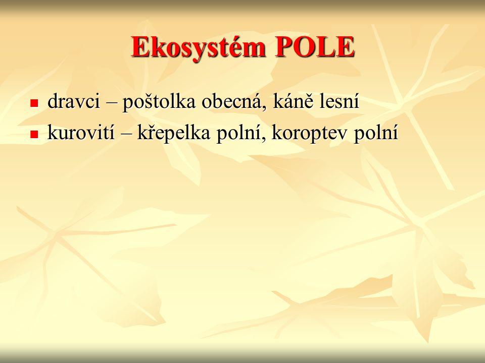 Ekosystém POLE dravci – poštolka obecná, káně lesní dravci – poštolka obecná, káně lesní kurovití – křepelka polní, koroptev polní kurovití – křepelka polní, koroptev polní