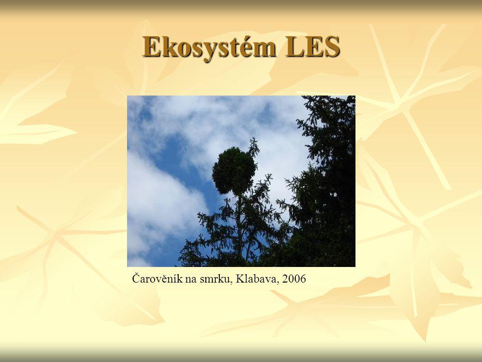 Ekosystém LES Čarověník na smrku, Klabava, 2006