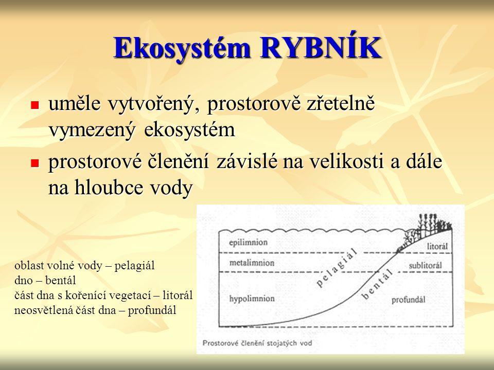 Ekosystém RYBNÍK uměle vytvořený, prostorově zřetelně vymezený ekosystém uměle vytvořený, prostorově zřetelně vymezený ekosystém prostorové členění závislé na velikosti a dále na hloubce vody prostorové členění závislé na velikosti a dále na hloubce vody oblast volné vody – pelagiál dno – bentál část dna s kořenící vegetací – litorál neosvětlená část dna – profundál