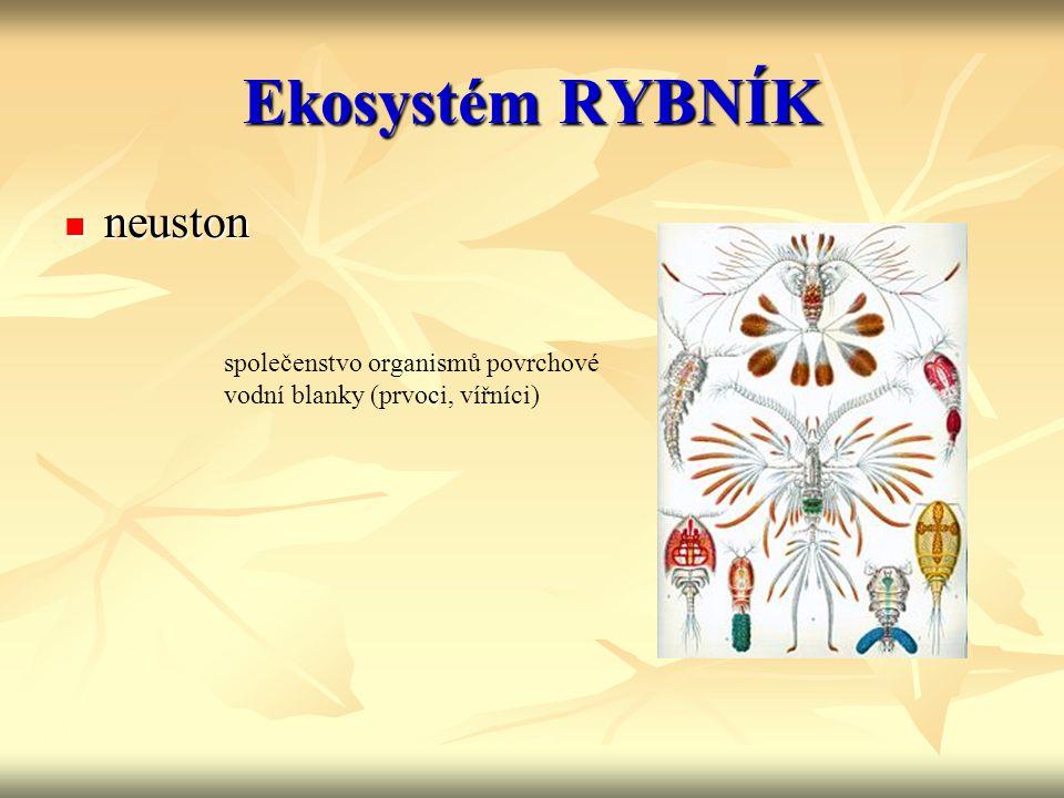 Ekosystém RYBNÍK neuston neuston společenstvo organismů povrchové vodní blanky (prvoci, vířníci)