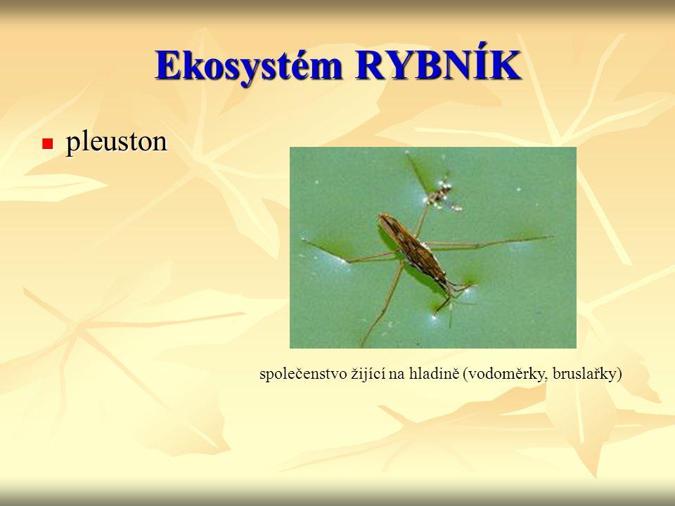 Ekosystém RYBNÍK pleuston pleuston společenstvo žijící na hladině (vodoměrky, bruslařky)