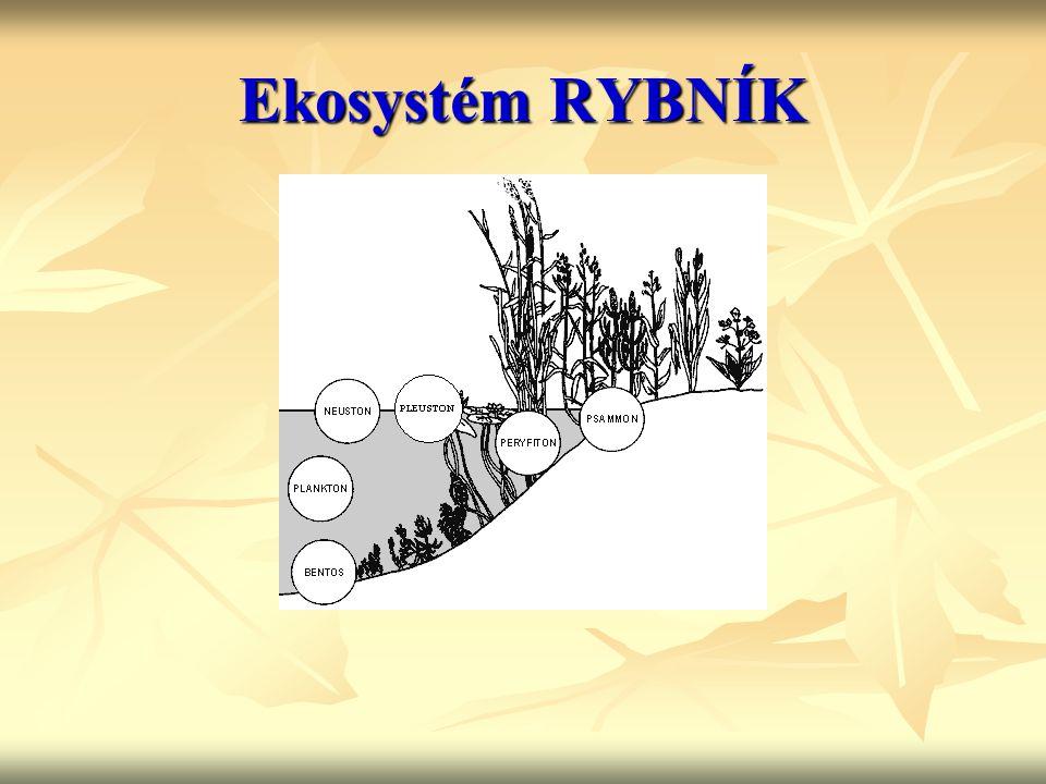 Ekosystém RYBNÍK
