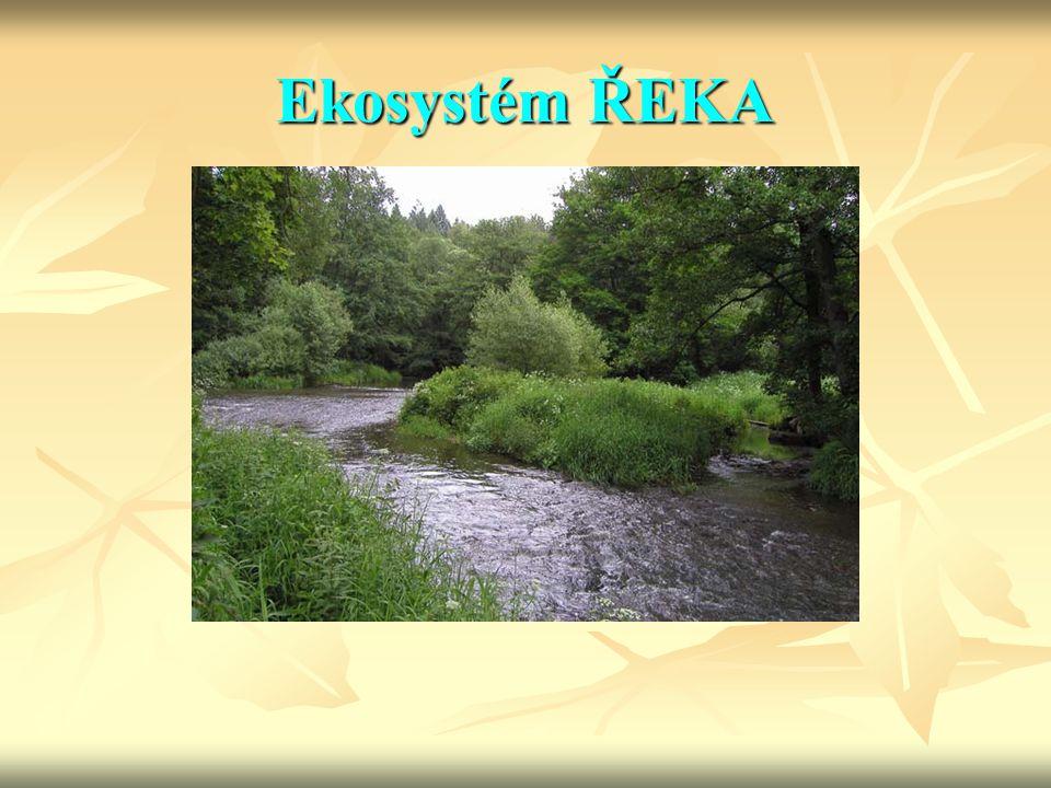 Ekosystém ŘEKA