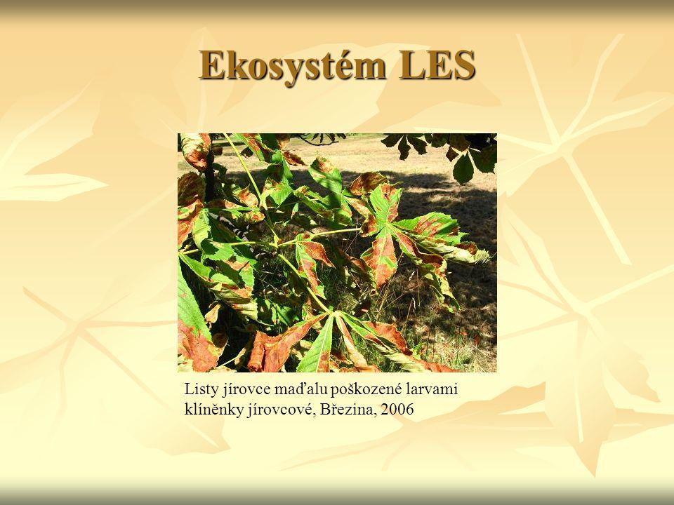 Ekosystém POLE lasice kolčava (Mustela nivalis) lasice hranostaj (Mustela erminea) tchoř světlý (Mustela eversmanni)