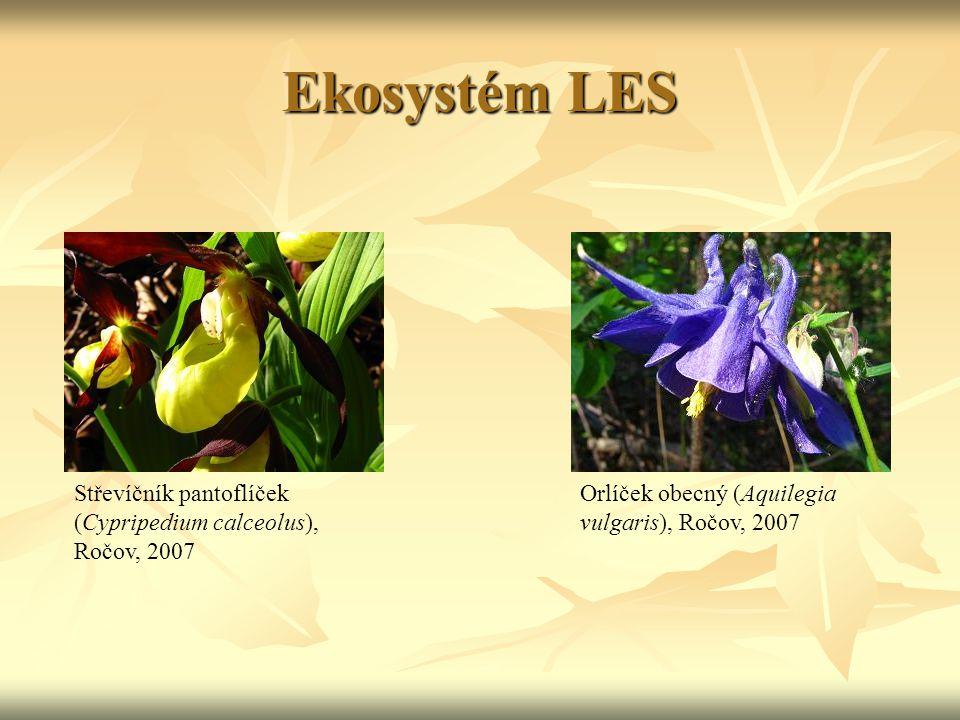 Ekosystém LES Střevíčník pantoflíček (Cypripedium calceolus), Ročov, 2007 Orlíček obecný (Aquilegia vulgaris), Ročov, 2007