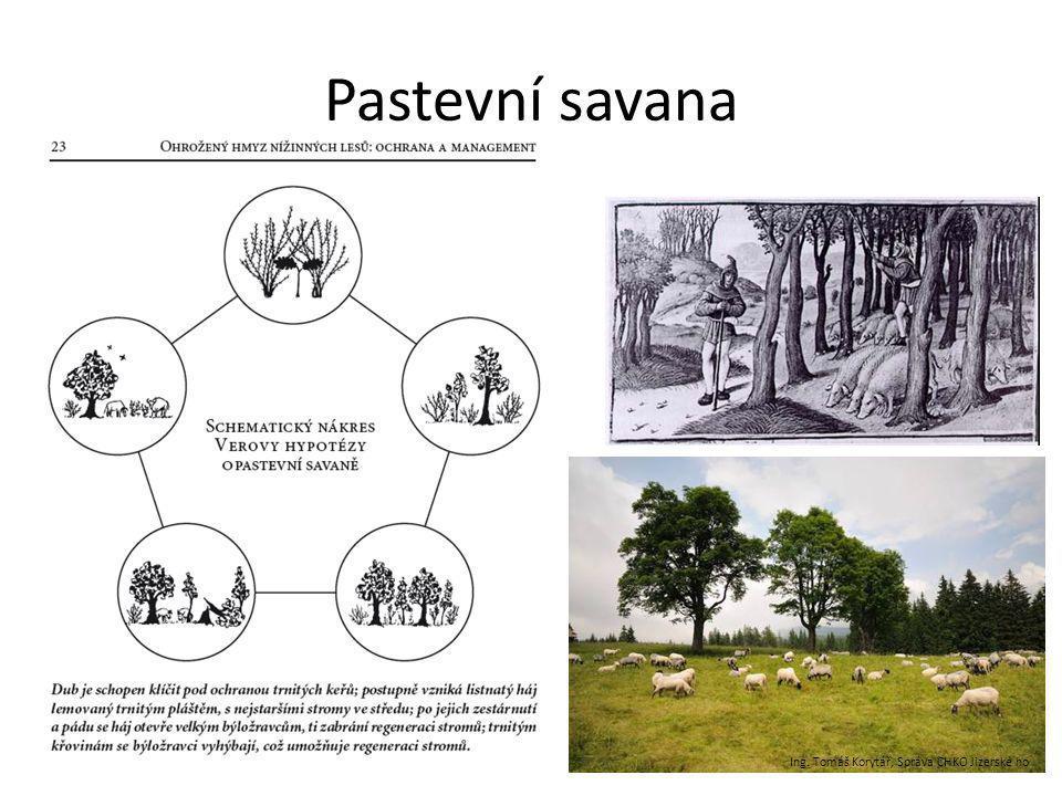 Pastevní savana Ing. Tomáš Korytář, Správa CHKO Jizerské ho