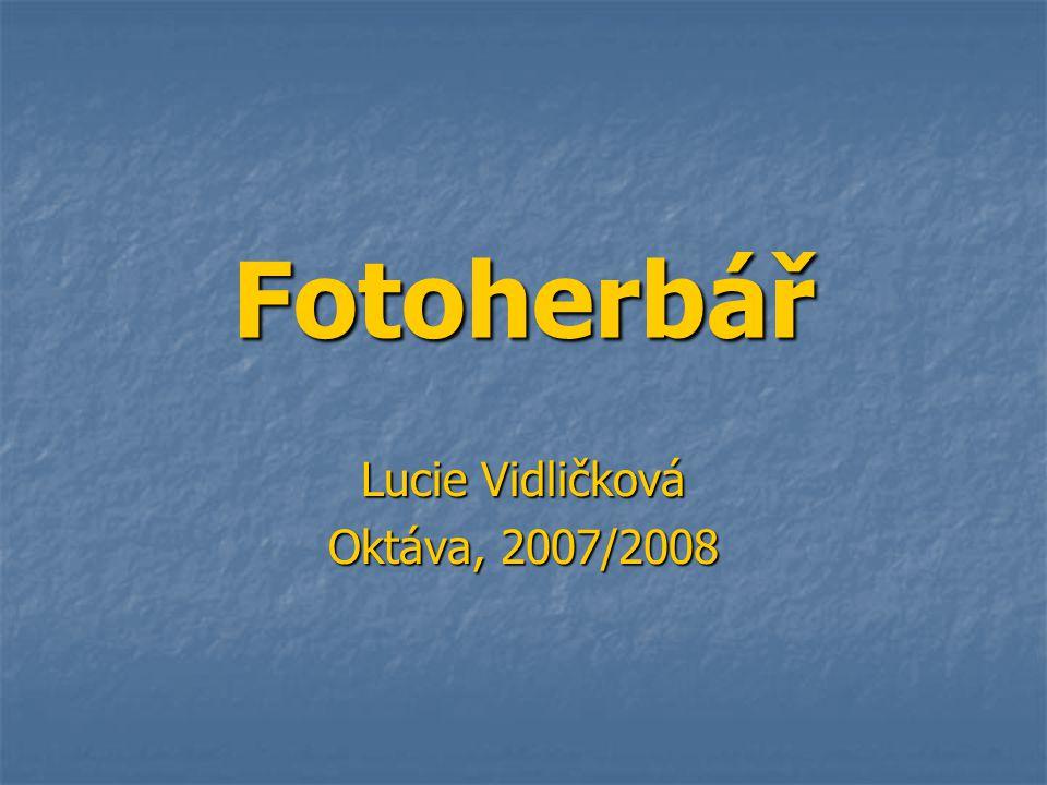 Fotoherbář Lucie Vidličková Oktáva, 2007/2008