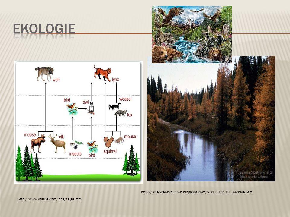  Převažují nahosemenné rostliny - jehličnany  Adaptace – neopadavé, kónický tvar pomáhá lépe sjíždět těžkému sněhu  Stromové, bylinné a mechové patro http://louisbiome.webnode.com/news/works-consulted1/