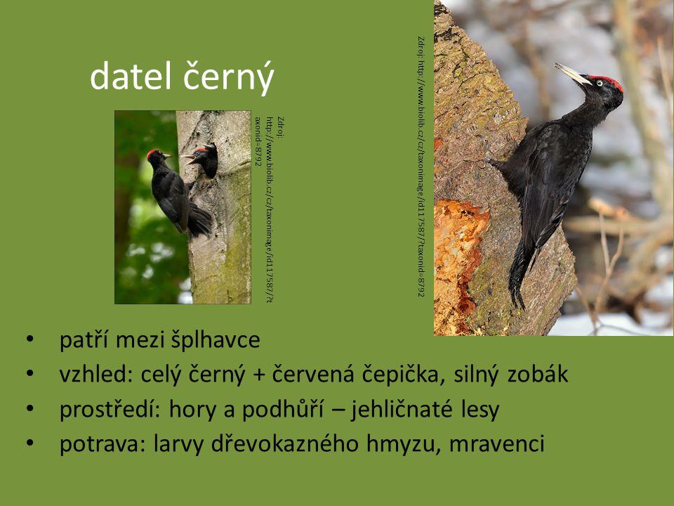 datel černý patří mezi šplhavce vzhled: celý černý + červená čepička, silný zobák prostředí: hory a podhůří – jehličnaté lesy potrava: larvy dřevokazného hmyzu, mravenci Zdroj: http://www.biolib.cz/cz/taxonimage/id117587/?taxonid=8792