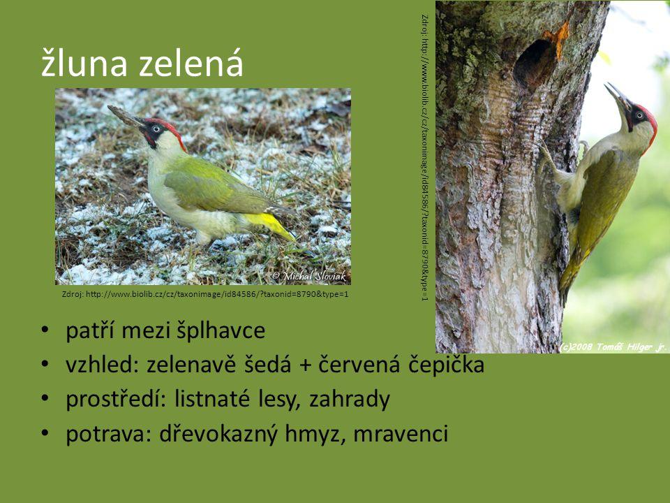 žluna zelená patří mezi šplhavce vzhled: zelenavě šedá + červená čepička prostředí: listnaté lesy, zahrady potrava: dřevokazný hmyz, mravenci Zdroj: http://www.biolib.cz/cz/taxonimage/id84586/?taxonid=8790&type=1