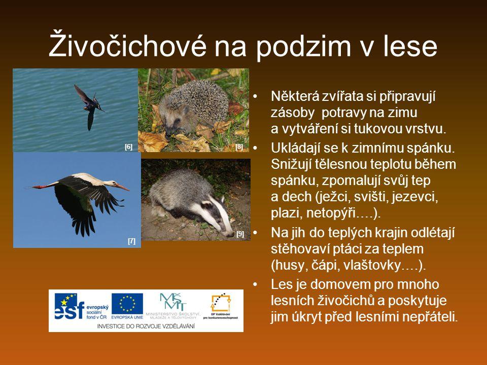 Zmije obecná jediný jedovatý had v ČR chráněný živočich loví v noci vyhřívá se přes den na mýtinách, loukách, pasekách klikatá tmavá čára na hřebě živí se drobnými hlodavci, obojživelníky, malými ptáky, hmyzem [19]