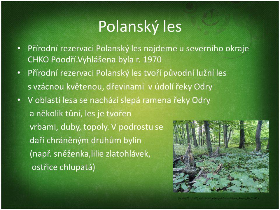 Polanský les Přírodní rezervaci Polanský les najdeme u severního okraje CHKO Poodří.Vyhlášena byla r. 1970 Přírodní rezervaci Polanský les tvoří původ