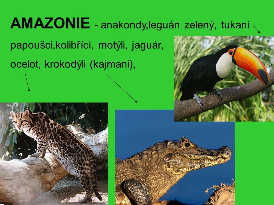 AMAZONIE - anakondy,leguán zelený, tukani papoušci,kolibříci, motýli, jaguár, ocelot, krokodýli (kajmani),