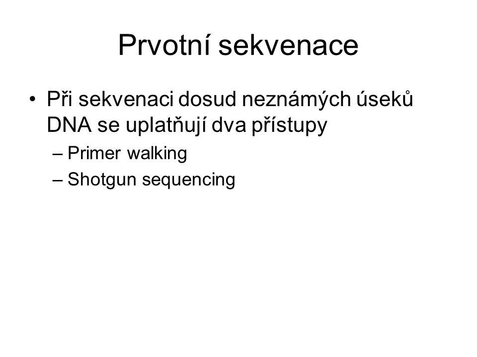Prvotní sekvenace Při sekvenaci dosud neznámých úseků DNA se uplatňují dva přístupy –Primer walking –Shotgun sequencing
