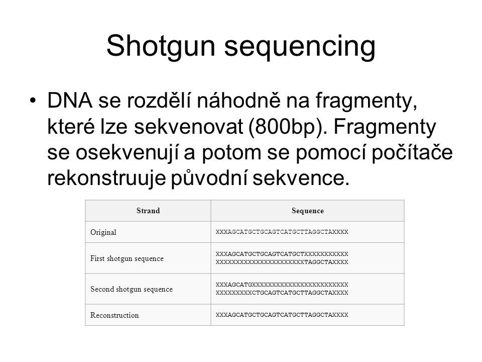 Shotgun sequencing DNA se rozdělí náhodně na fragmenty, které lze sekvenovat (800bp). Fragmenty se osekvenují a potom se pomocí počítače rekonstruuje