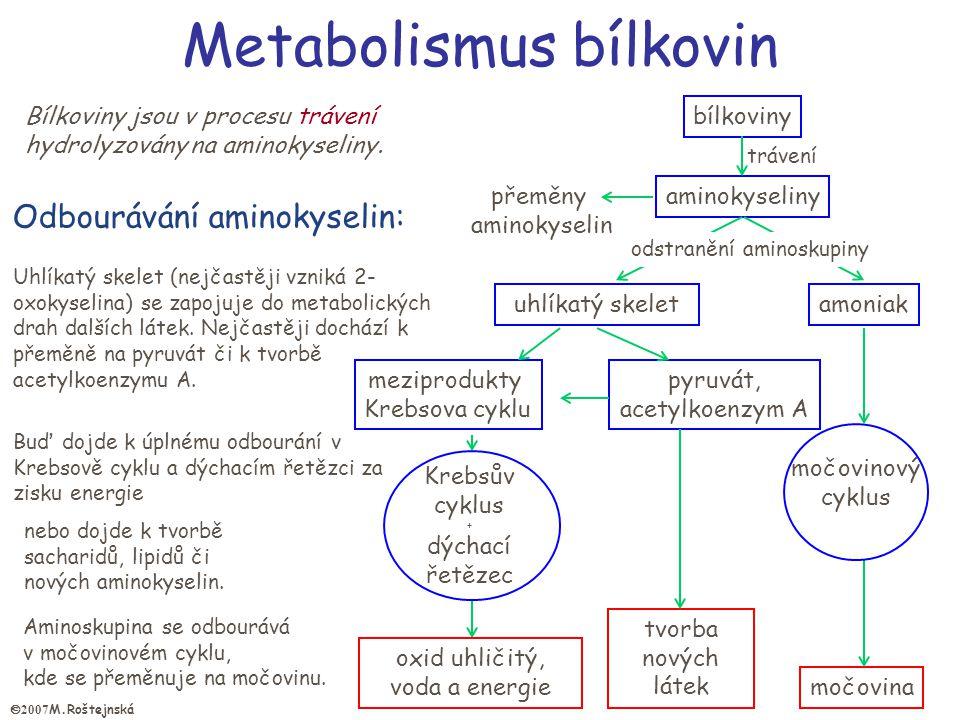 bílkoviny aminokyseliny trávení močovinový cyklus močovina uhlíkatý skelet Krebsův cyklus + dýchací řetězec amoniak meziprodukty Krebsova cyklu pyruvát, acetylkoenzym A tvorba nových látek oxid uhličitý, voda a energie Buď dojde k úplnému odbourání v Krebsově cyklu a dýchacím řetězci za zisku energie nebo dojde k tvorbě sacharidů, lipidů či nových aminokyselin.
