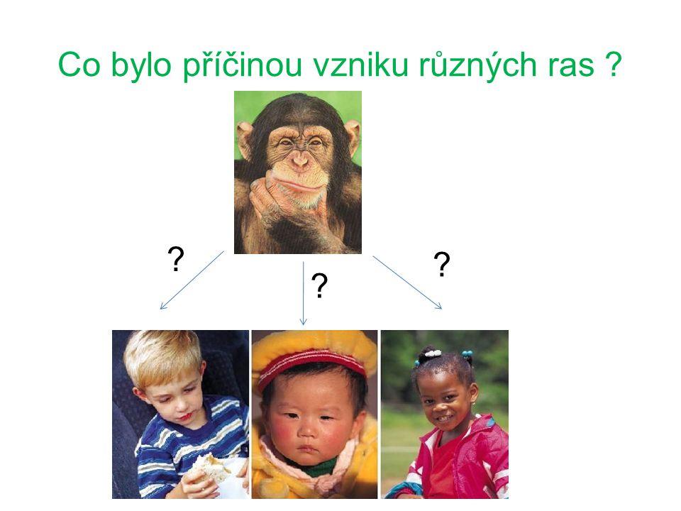 Lidské rasy se vytvářely postupně před mnoha lety ze společných předků vlivem různého rozdílného prostředí.