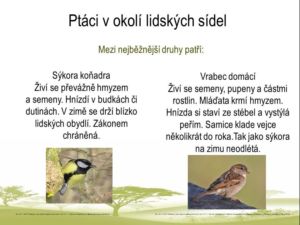 Ptáci v okolí lidských sídel Mezi nejběžnější druhy patří: [cit.