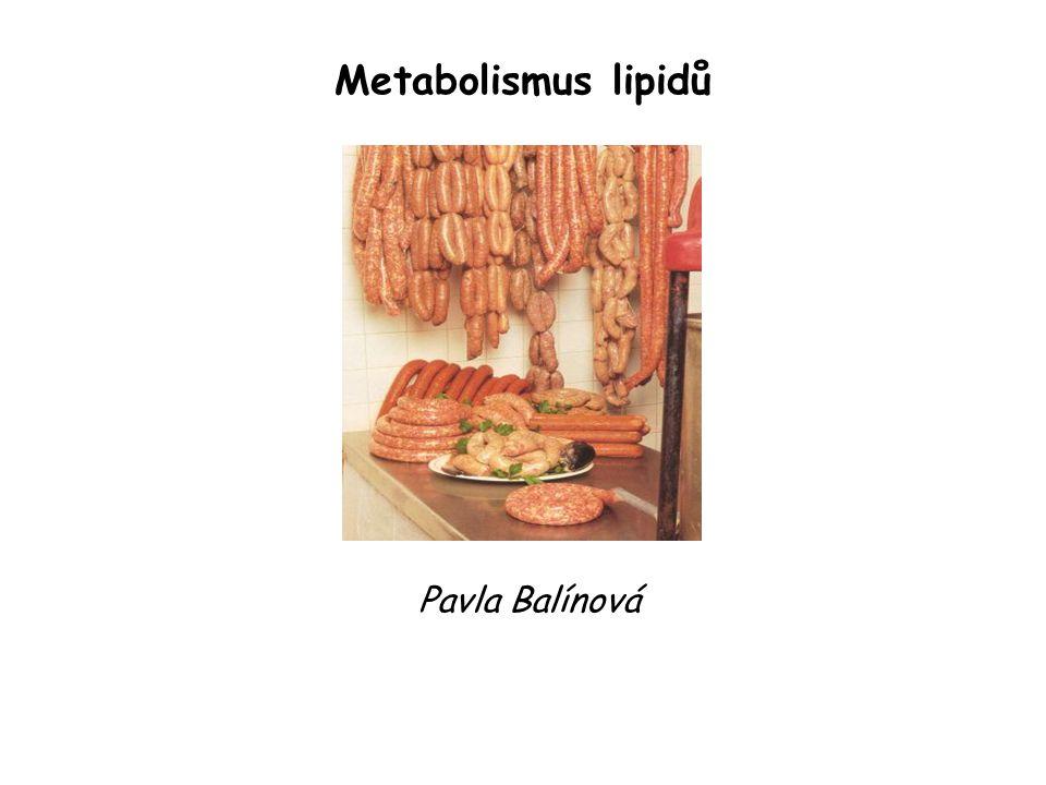 Metabolismus lipidů Pavla Balínová