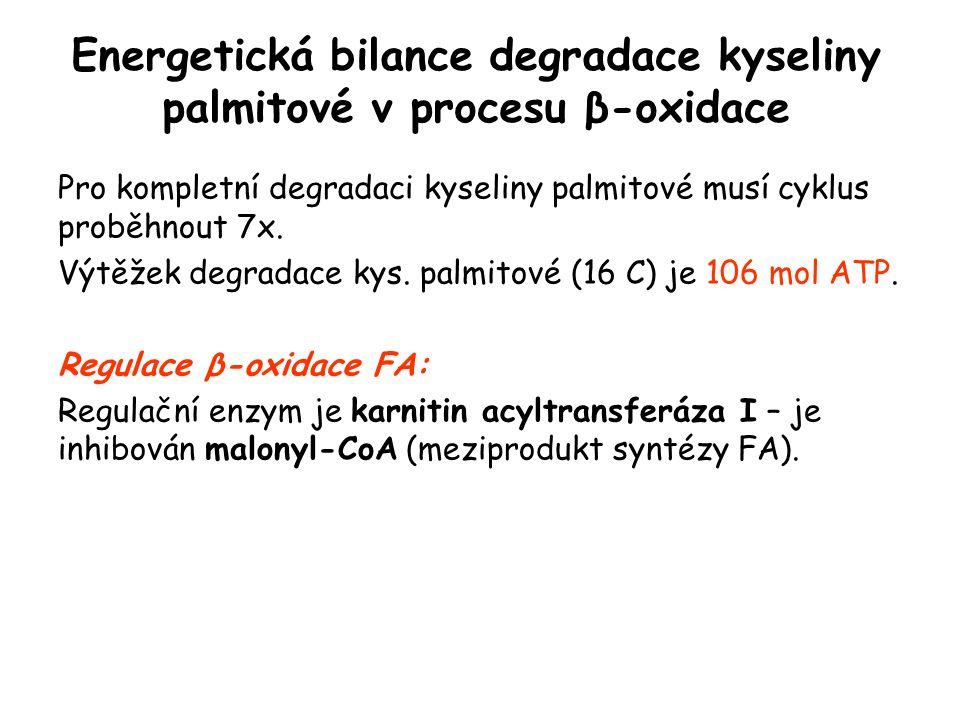 Energetická bilance degradace kyseliny palmitové v procesu β-oxidace Pro kompletní degradaci kyseliny palmitové musí cyklus proběhnout 7x. Výtěžek deg
