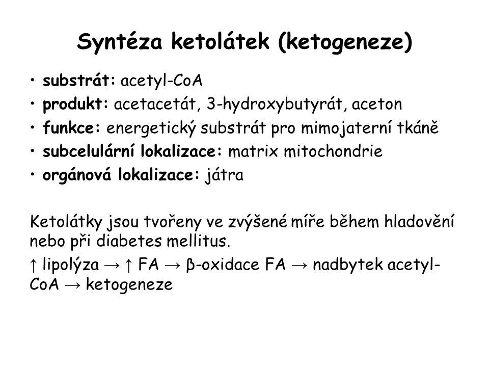 Syntéza ketolátek (ketogeneze) substrát: acetyl-CoA produkt: acetacetát, 3-hydroxybutyrát, aceton funkce: energetický substrát pro mimojaterní tkáně s
