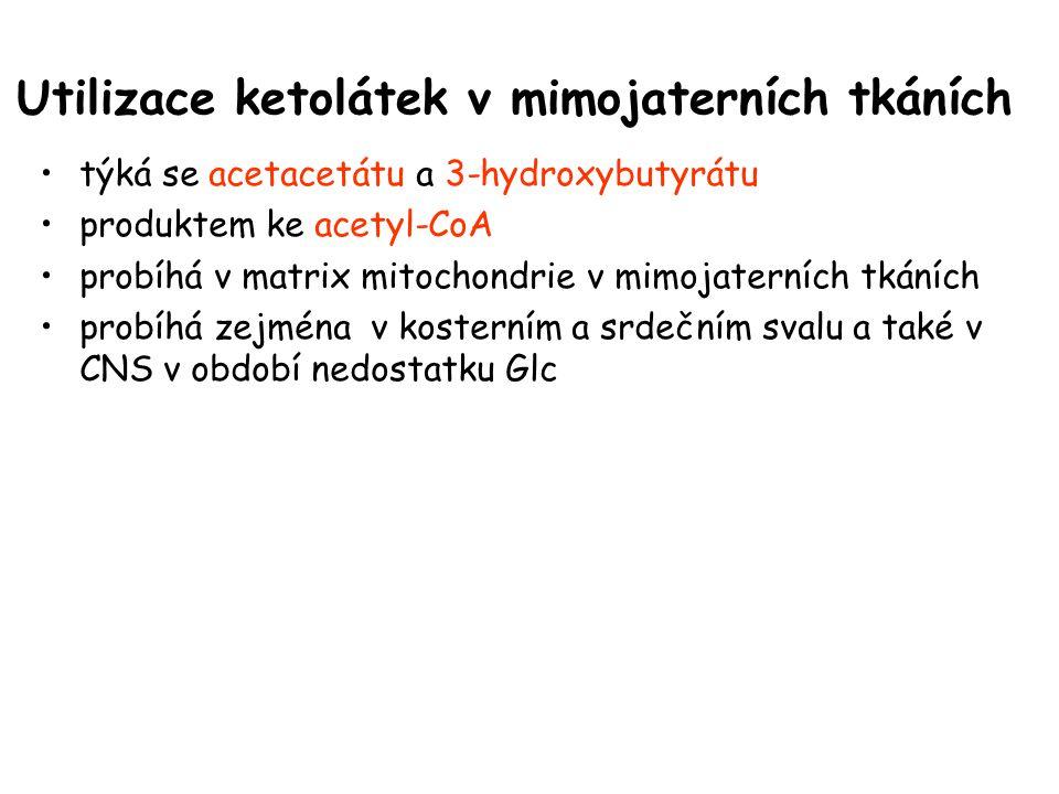 Utilizace ketolátek v mimojaterních tkáních týká se acetacetátu a 3-hydroxybutyrátu produktem ke acetyl-CoA probíhá v matrix mitochondrie v mimojatern