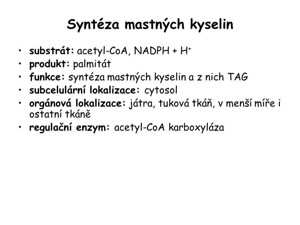 Syntéza mastných kyselin substrát: acetyl-CoA, NADPH + H + produkt: palmitát funkce: syntéza mastných kyselin a z nich TAG subcelulární lokalizace: cy