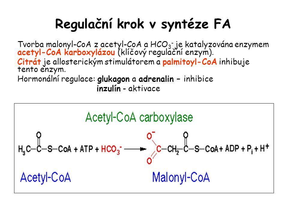 Regulační krok v syntéze FA Tvorba malonyl-CoA z acetyl-CoA a HCO 3 - je katalyzována enzymem acetyl-CoA karboxylázou (klíčový regulační enzym). Citrá