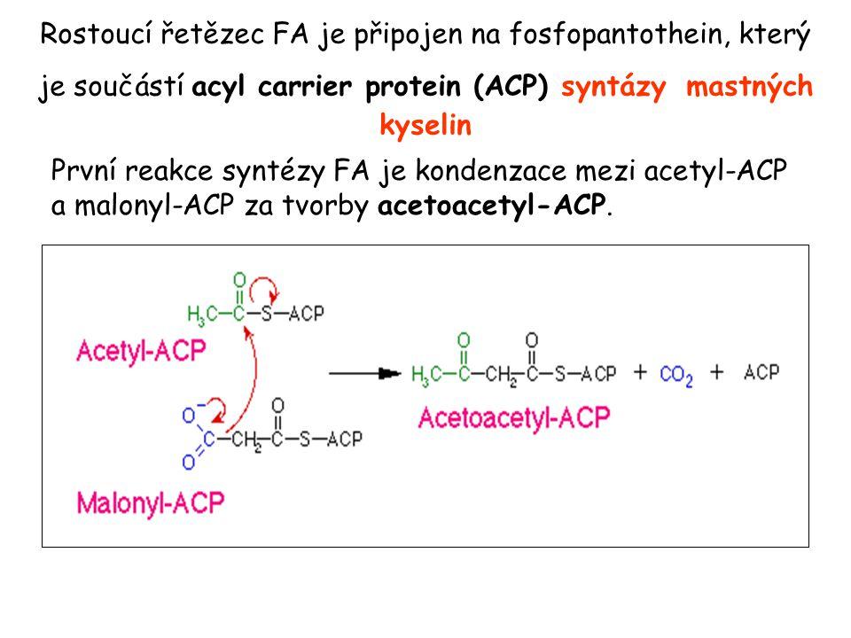 Rostoucí řetězec FA je připojen na fosfopantothein, který je součástí acyl carrier protein (ACP) syntázy mastných kyselin První reakce syntézy FA je k