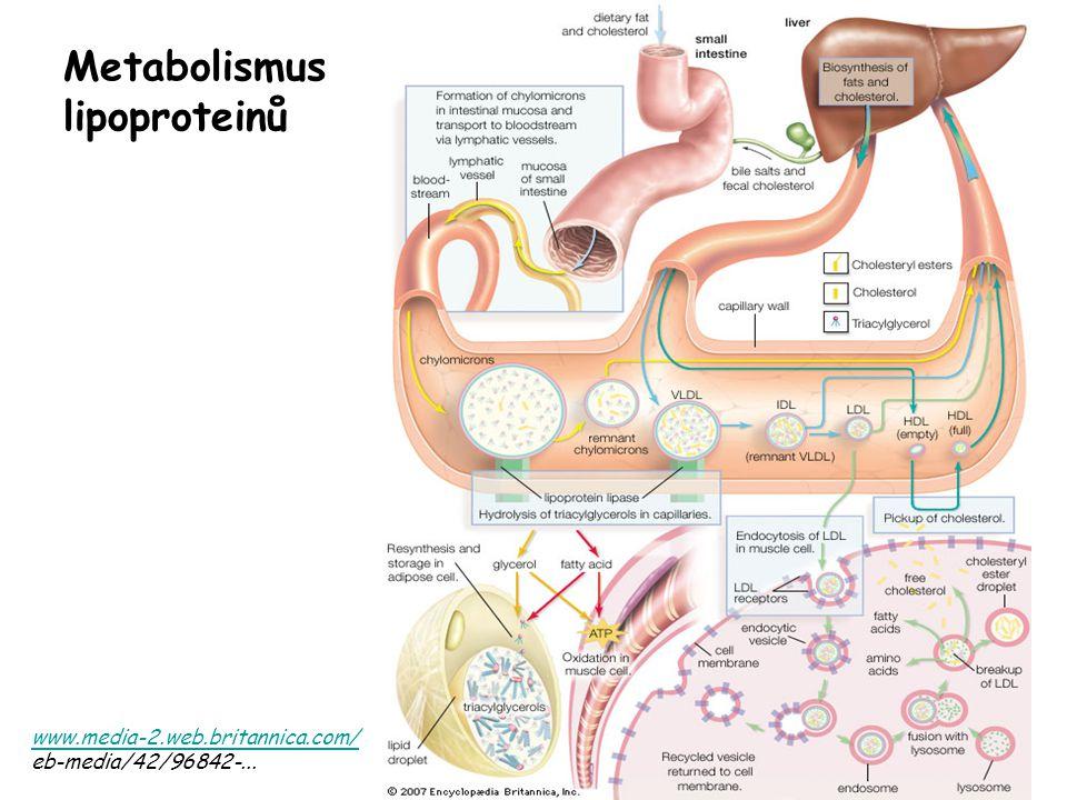 www.media-2.web.britannica.com/ eb-media/42/96842-... Metabolismus lipoproteinů