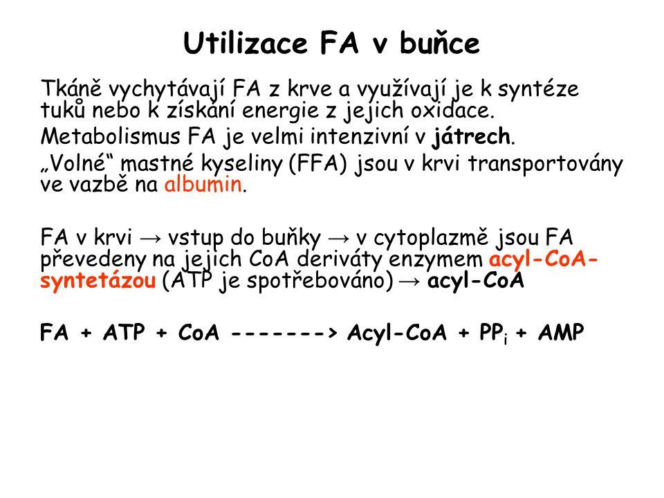 Utilizace FA v buňce Tkáně vychytávají FA z krve a využívají je k syntéze tuků nebo k získání energie z jejich oxidace. Metabolismus FA je velmi inten