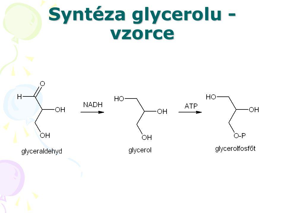 Syntéza tuků CH 2 -OH CH 2 -O-CO-C 17 H 35 | CH-OH +3 C 17 H 35 CO~SCoA → CH-O-CO-C 17 H 35 + 3 HS~CoA + P | CH 2 -O~P CH 2 -O-CO-C 17 H 35