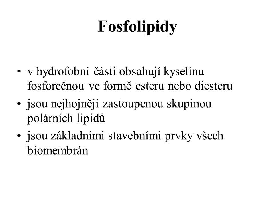 Fosfolipidy v hydrofobní části obsahují kyselinu fosforečnou ve formě esteru nebo diesteru jsou nejhojněji zastoupenou skupinou polárních lipidů jsou základními stavebními prvky všech biomembrán