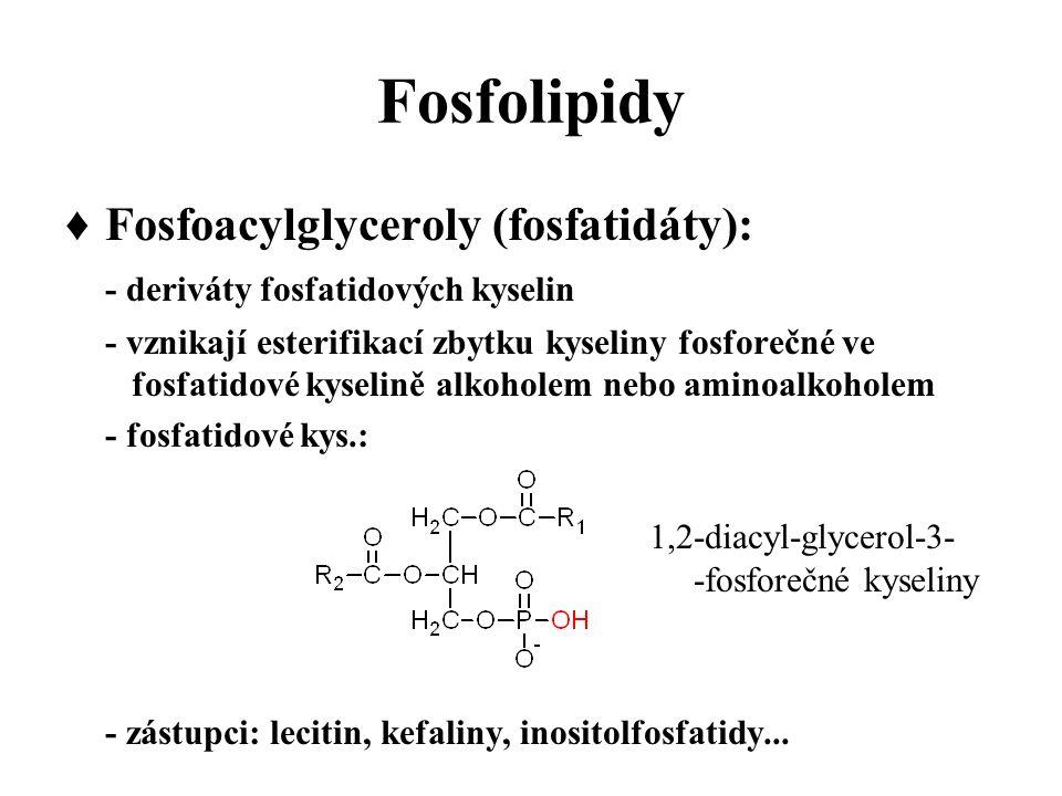 Fosfolipidy ♦Fosfoacylglyceroly (fosfatidáty): - deriváty fosfatidových kyselin - vznikají esterifikací zbytku kyseliny fosforečné ve fosfatidové kyselině alkoholem nebo aminoalkoholem - fosfatidové kys.: 1,2-diacyl-glycerol-3- -fosforečné kyseliny - zástupci: lecitin, kefaliny, inositolfosfatidy...